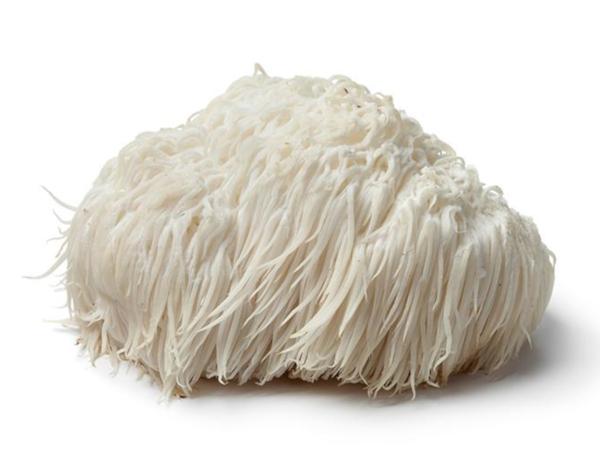 Lions Mane Mushroom benefits